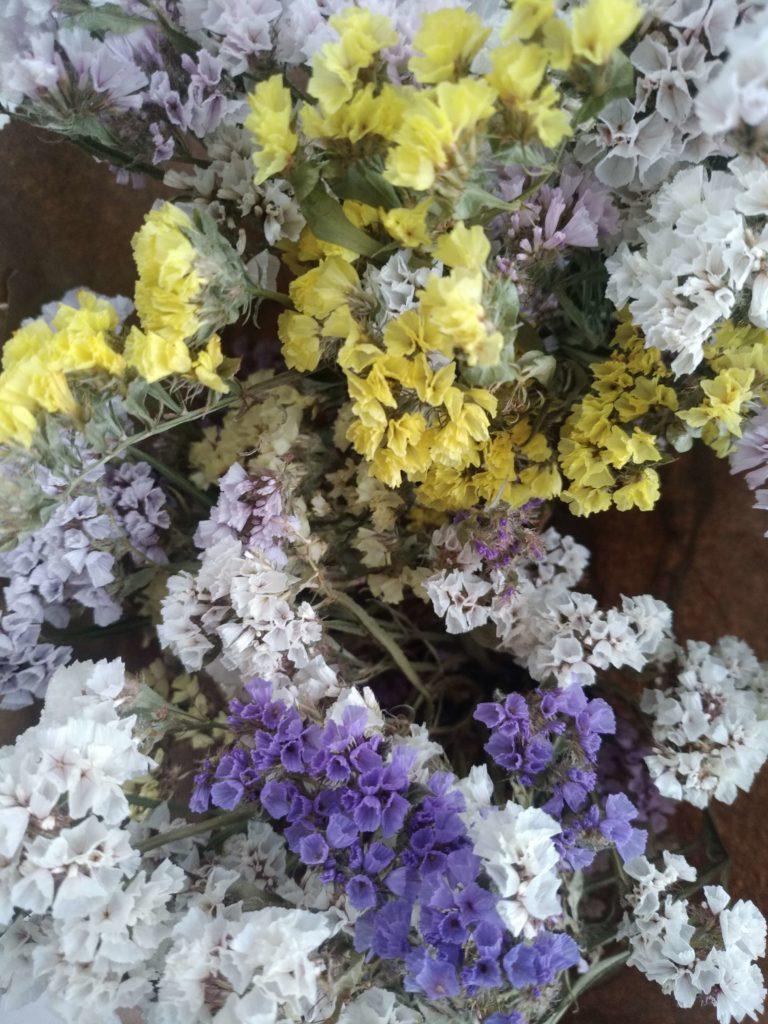 Fleurs séchées statice