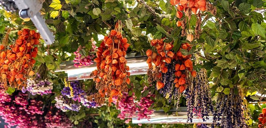 fleurs séchées suspendues