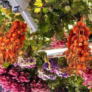 fleurs séchées histoire et techniques